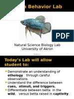 Lab 2 - Animal Behavior Bettas Fall 2014