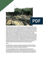 Deforestación en El Salvador