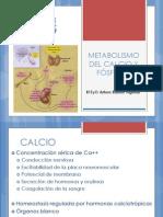 Expo Metabolismo Delcalcio