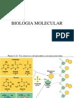 BIOLOGIA MOLECULAR1