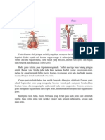 Anatomi & Histologi Penis