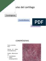 Células Del Cartílago