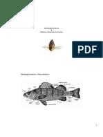 Morfologia Externa.pdf