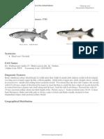 FAO Fisheries &Amp; Aquaculture - Aquatic Species