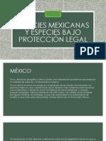 Especies Mexicanas y Especies Bajo Protección Legal