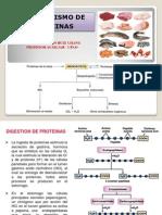 Metabolismo de Proteinas 2