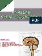 Sistem Persyarafan Anatomi