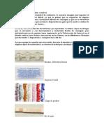 Piedras Materiales y Mostacillas