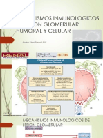Mecanismos de Lesion Glomerular