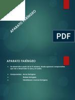 Aparato faríngeo(1)