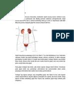 Anatomi Dkk