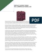 Khasiat Dan Manfaat Cacing Tanah