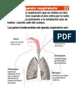 131851947 El Aparato Respiratorio
