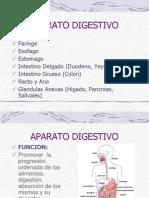 anatom APARATO DIGESTIVO.ppt