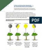 Plantas y Fases Lunares