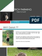 Ostrich Farming ( FARM to PLATE) Final