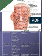 Musculos de Cabeza y Faciales