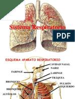Aparato Respiratorio CONCLUSION