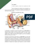 fisica del sonido.doc