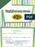 (304961869) Staphylococcus Aureus