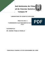 Electroforesis de Adn e. Coli