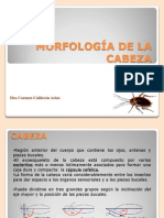 IV Clase Cabeza Aparatos Bucales 2013 II