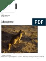 natl geo mongoose