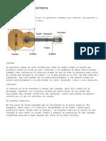Atologia  de  Guitarra.pdf