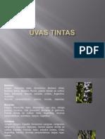 Uvas Tintas