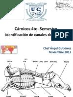 Canales de Reses, Cerdo, Etc