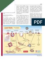 Lipid Raft Overview