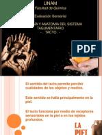 Fisiología y Anatomia Del Tacto2