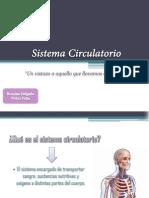 Sistema Circulatorio - Romina Delgado Ji