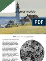 Organismos modelo [Febrero 19 de 2012].pptx