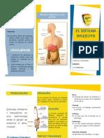 Sistema Digestivo Listo