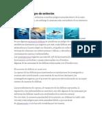 El Delfín en Peligro de Extinción