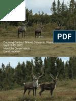 Daryll Manitoba Herds