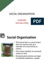 Social Organization_Caste of Honeybee-Moog 2013