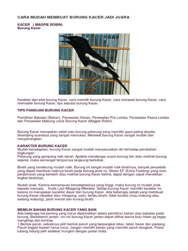 Unduh 550+  Gambar Burung Yang Mudah HD Paling Bagus Gratis