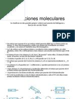 Fuerza Molecular