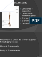 Esqueletodelmiembrosuperior 120714225357 Phpapp02 (1)