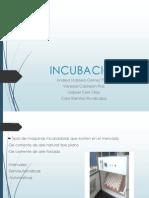 Incubacion Def