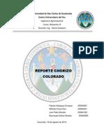 Reporte Chorizo Colorado