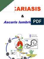 Parasitology Practice 1- Nematode