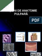ANATOMIE PULPARA