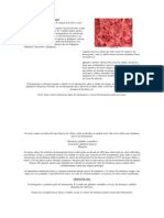 O Que é Hemograma Completo