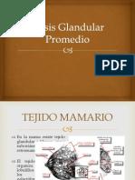 Dosis Glandular Promedio