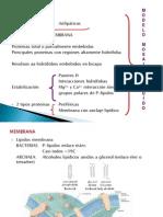 Membrana Celular 20141