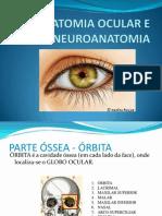 Anatomia Ocular e Neuroanatomia