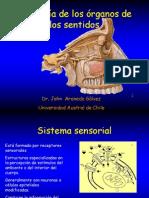 Resumen Fisiologia Organos Sentidos